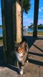 Cat-in-Park-1-SCVALENZANO