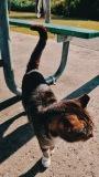 Cat-in-Park-2-SCVALENZANO